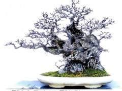 广西盆景赏石分会第一届全体会员大会在柳州召开