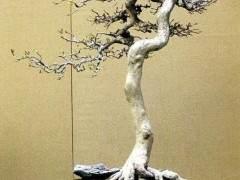 运用岭南盆景蓄枝截干的手法 则枝干曲折而不显夸张