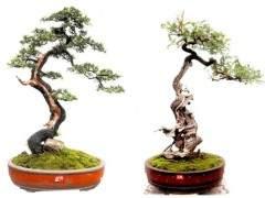 2018年 第八届云南省盆景艺术展定是个收获的好季节