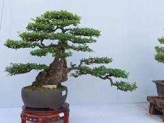 首届杭州盆景赏石艺术博览会 邀请函