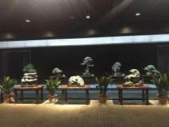 2018年苏州园林盆景精品展在科举博物馆举行