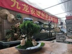 宁波花木世界的第二场盆景创意设计在本周拉开帷幕