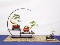 2018年 第十届中国如皋花木盆景艺术节