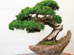 广西盆景艺术家协会会员活动中心揭牌