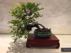 """""""2013世界盆景大会""""在扬州瘦西湖风景区开幕"""