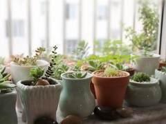 慢生活沙龙之多肉萌趣植物盆景制作活动记录