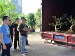 连江县一男子在霞浦盗窃13棵盆景树苗 被警方抓获