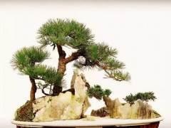 松石盆景造型构图基本形式