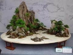 国际盆景大会即将开幕 上海植物园厉兵秣马再争荣