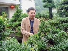 记湖北省长阳土家族自治县盆景艺术家刘进