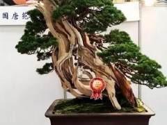1999年10月第五届亚太盆景、雅石展在台北举办