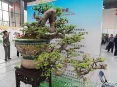 江苏第十五届盆景艺术节