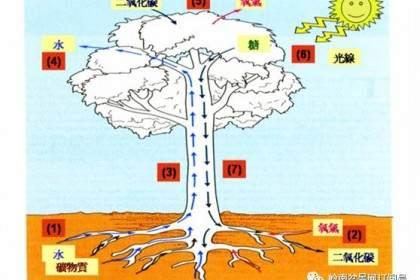 图解 盆景换盆后怎么生根的方法