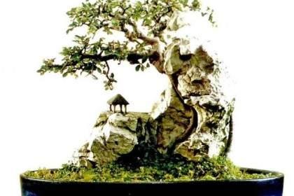 谈附石盆景的选石技巧