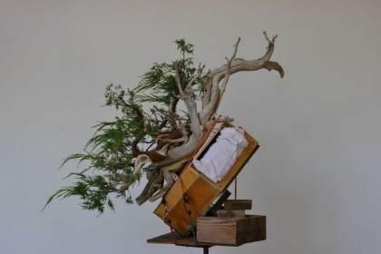 老外图片展示杜松盆景的制作过程