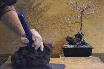 图解 中国榆树盆景的根岩石风格示范