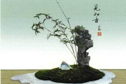 竹草类盆景的制作(竹子篇续)之五