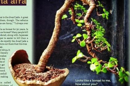 老外演示马齿苋树怎么制作的3个过程