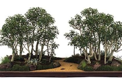 图解 如何更好的修剪叶榕盆景的方法