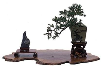如何将石头用作展示盆景的配件 图片