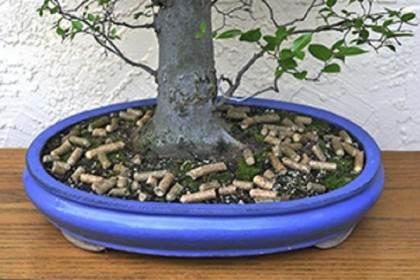 盆景施肥间隔时间:从一周到一个月不等