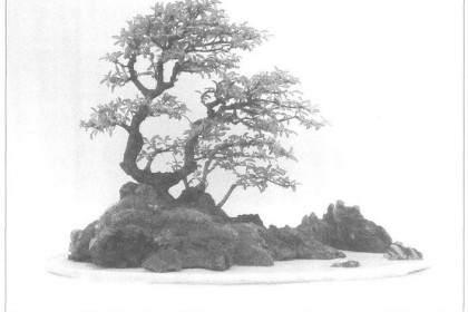 盆景作品成型的4个阶段