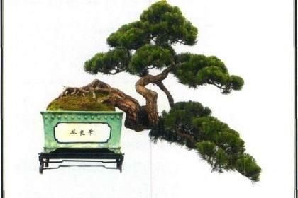 山松盆景在串笔嫁接前的准备工作