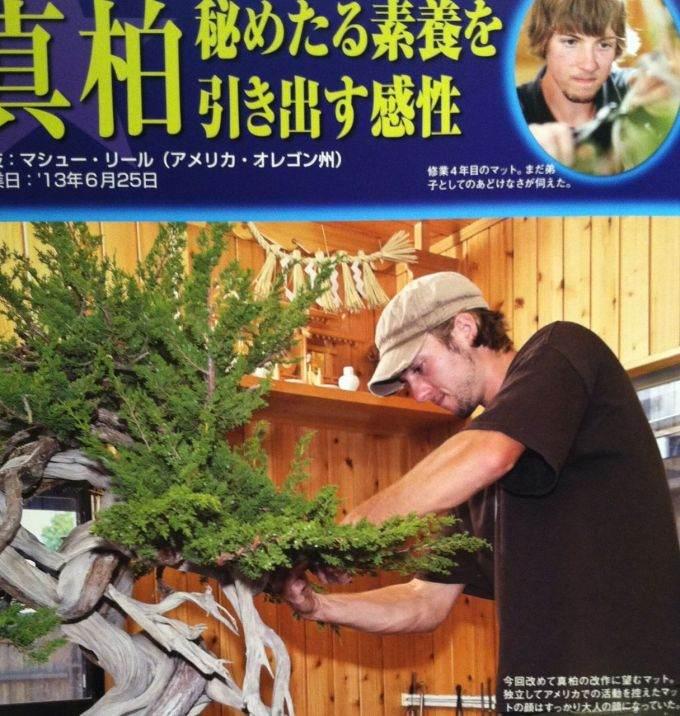 马特雷尔在日本盆景杂志上设计的杜松盆景