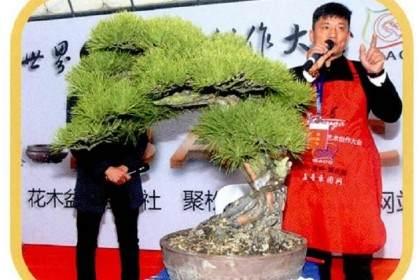 图解 本人对赤松盆景怎么制作的构想