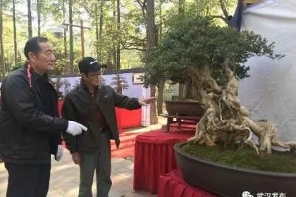 去武汉解放公园看珍稀盆景