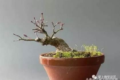 盆景补根的方法——接细根「图解」