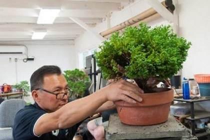 图解 翻盆时尽量少让盆景的根暴露在空气中
