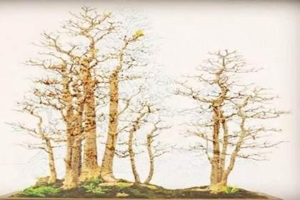树桩盆景的施肥极为讲究