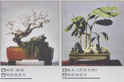 苏州盆景艺术流派的主要缔造者之一——周瘦鹃