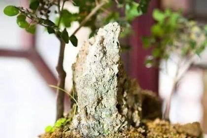 盆景植物的修剪与病虫害