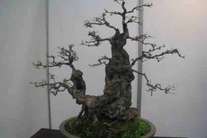 2008年 第七届粤港澳台盆景艺术博览会