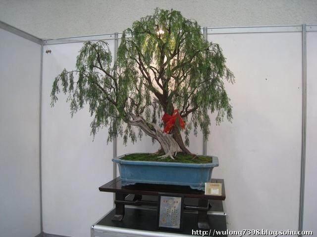 此次博览会还邀请了著名盆景作家王恒亮先生
