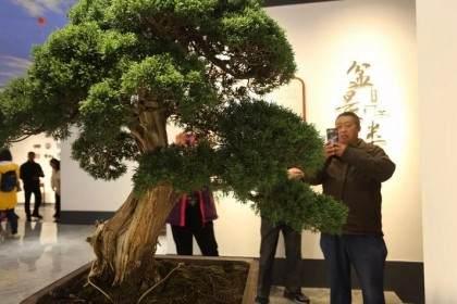 江苏盆景博物馆盛装开馆