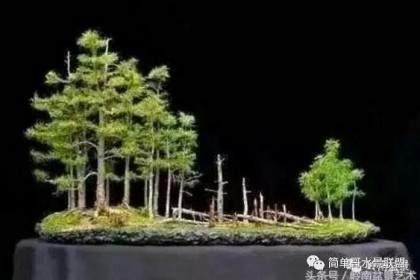 丛林式造景布局在盆景与水族造景中的运用