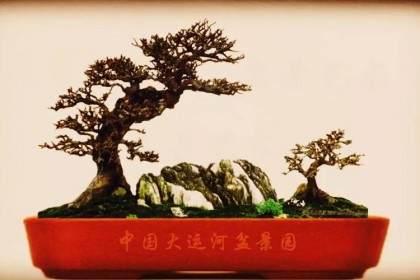 很多西方国家认为盆景是从日本起源的