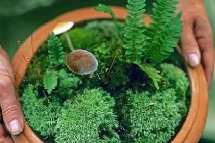 盆景放苔藓怎么浇水?看这3个注意事项
