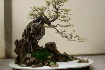 山石盆景中的山石较多 树木只是起点缀的作用