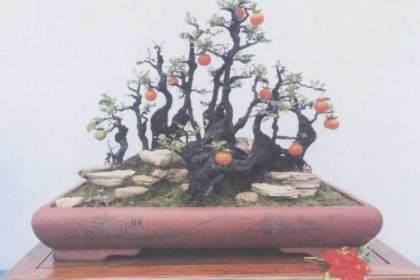 重庆市花卉盆景协会主办盆景艺术展