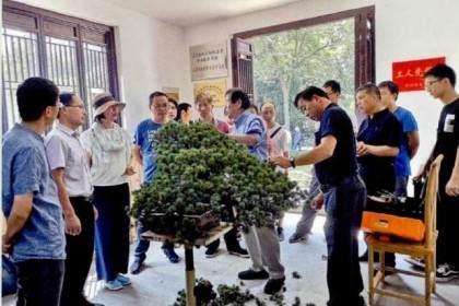 张小宝先生是中国最知名的盆景收藏家之一