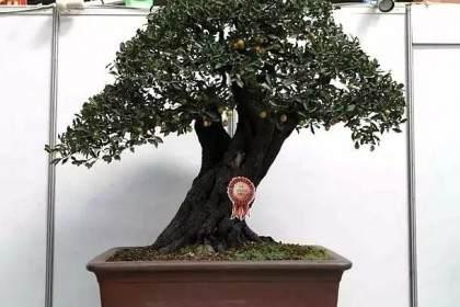 2009年 花木盆景官方网站正式开通