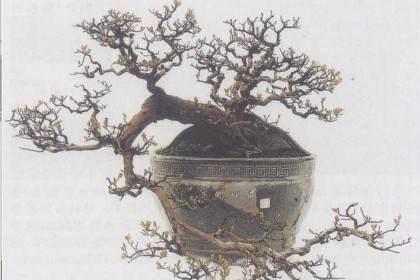 岭南盆景造型艺术岭南盆景风格