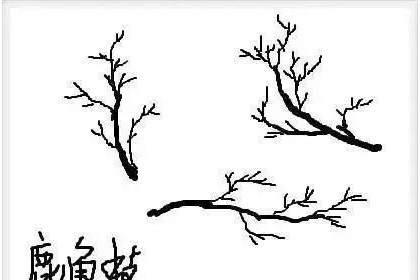盆景基础知识:树桩盆景的枝条造型