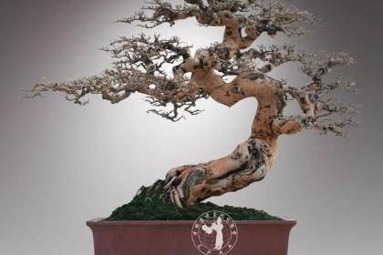 岭南盆景体现了中国文化的审美意识