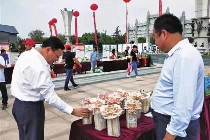 山东盆景蘑菇 亩产纯收入可达1.5万元