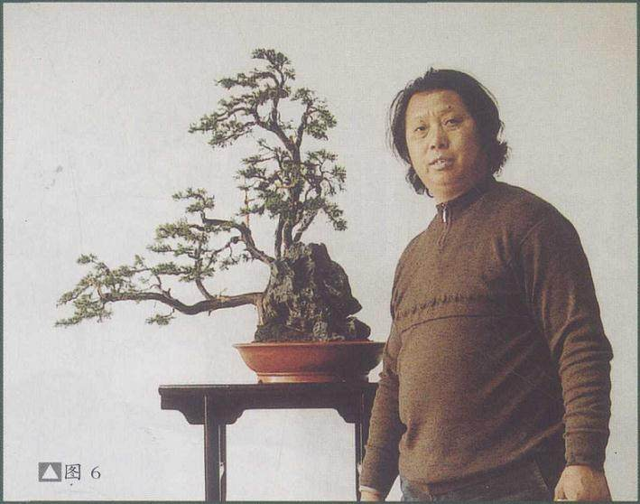 郑诚恭办了为期3天的松柏及杂木盆景舍利创作讲学